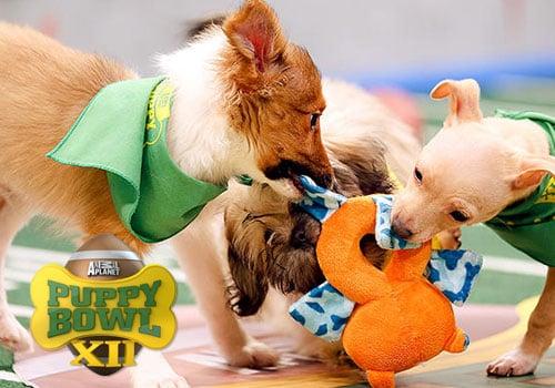 Animal Planet puppy bowl
