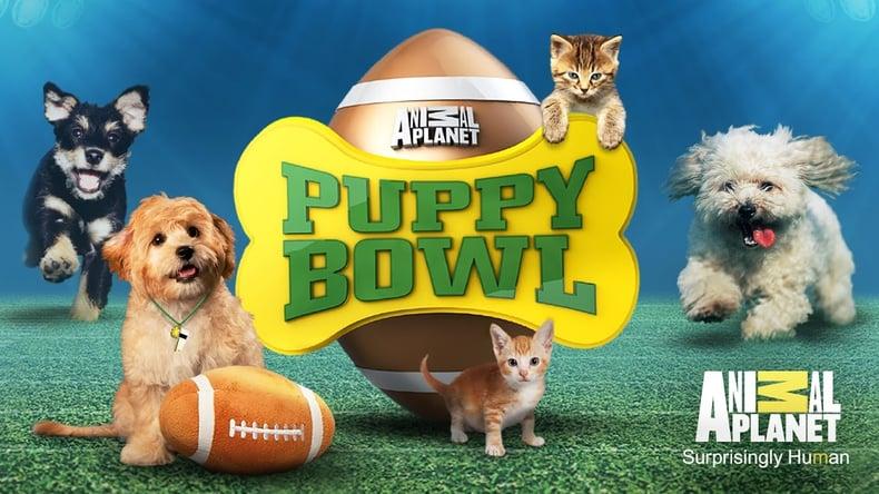 puppy-bowl.jpg